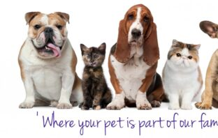 do you love your pet , pet stores near me, pet shop near me , pet store , dog shop near me , pet supplies near me , reptile store near me , pet supplies plus near me , dog stores near me , bird store near me , pet supply store near me , pet supply stores , reptile shops near me , bird store , does my dog love me , pet food store near me , pet food shop near me , pets stores near me , local pet stores , pet supplies plus grooming , pet food store , pet supplies plus locations , online pet shop near me , animal shop near me , why do i love my dog so much , nearby pet shop , reptile pet stores near me , pet supply warehouse , pet warehouse near me , near by pet shop , local pet stores near me , cat pet shop near me , pet store nearby , natural pet store , concord pet store , pet stores around me , value pet supplies , do dogs know we love them , wild bird store near me , dog supplies outlet , aspen dog , dog supplies warehouse , best pet shop near me , local pet shops , pet pet shop , pet supplies plus dog wash , aquarium pet shop , ryanspet , how to get your dog to like you , does my dog like me , why does my dog love me so much , dog warehouse , fish supply store near me , dog supply store near me , dog nail trimmer near me , premium pet supply , reptile pet shops near me , how to get your dog to love you , nearest pet shop near me , panhandle pet supply , tropical fish supplies , best pet store near me , aquarium fish store , petplus near me , natural pet food store , wormers drontal dogs , holistic pet store , best pet store , reptile food near me , nearby dog shop , wormers drontal dog tasty bone , the dog store , best pet shop , natural pet store near me , pet shop near by me , near me dog shop , pet food and supplies , why do dogs like me , reef aquarium supplies , pet supply outlet , nearest dog shop , discount pet store , natural pet supply , fish and aquarium supplies , goody's pet supply , hydra dog shampoo , animal supplies near me , big al's pet store , ho